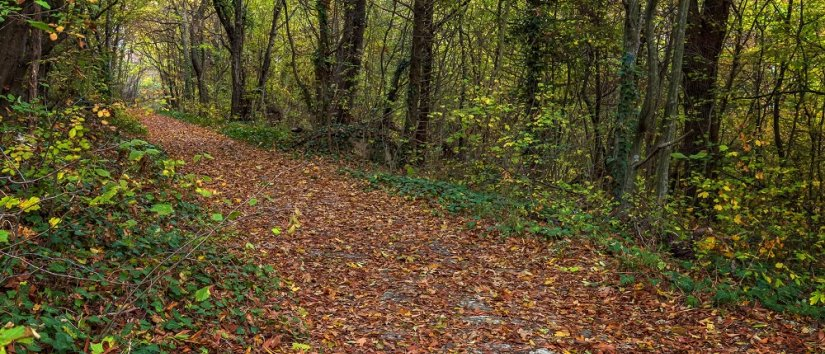 Best Forests to Visit in Istanbul